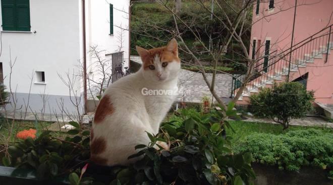 Il gatto Robby
