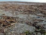 legname spiagge