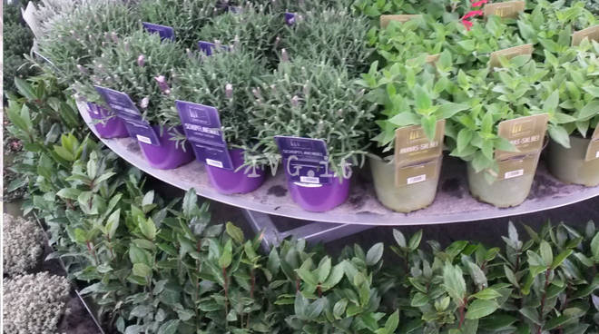 Florovivaismo Rb Plant