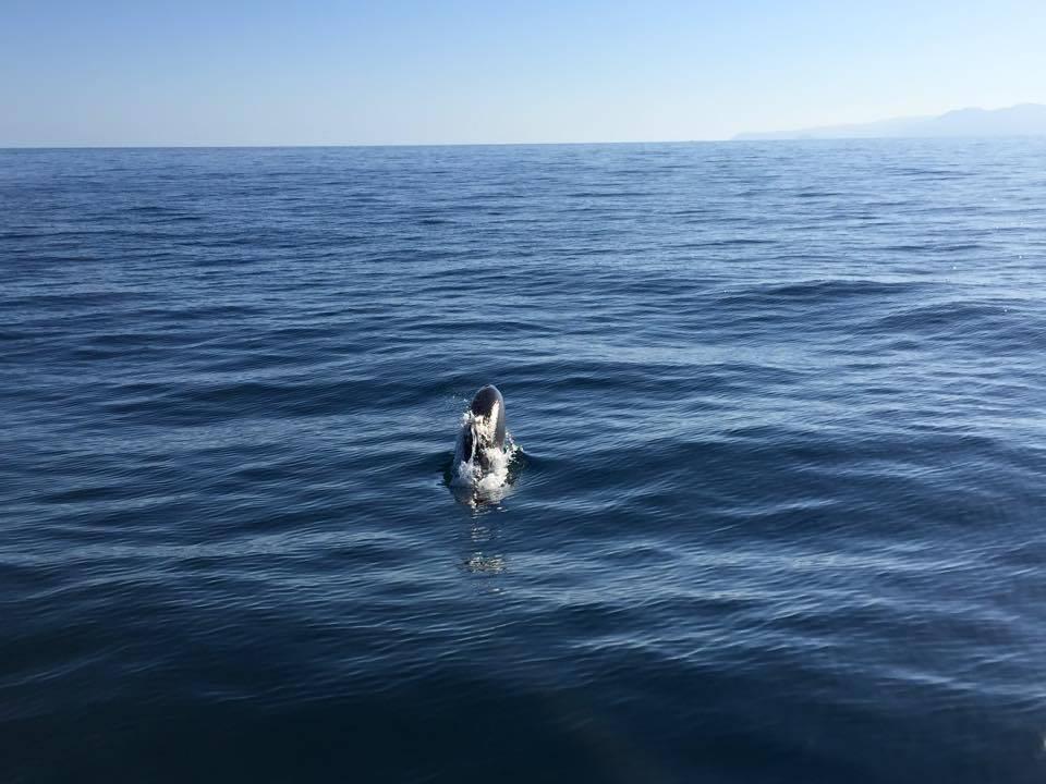 A Varigotti si fa il bagno con i delfini