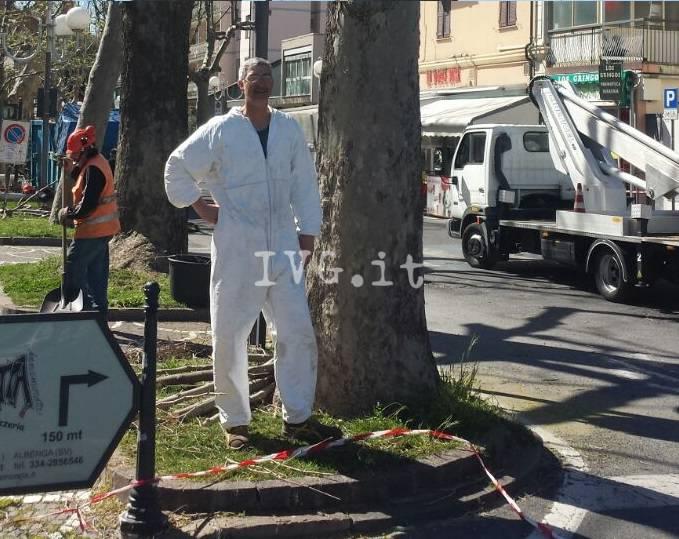 Albenga, ultimate le potature degli alberi di viale Italia
