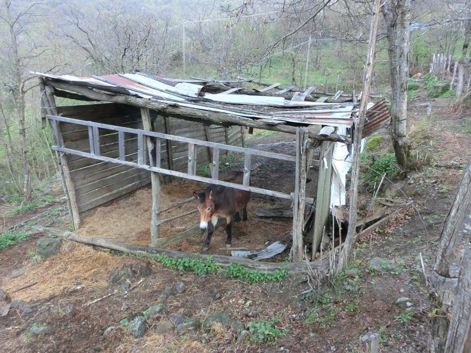 """Cavalli selvaggi dell'Aveto catturati e rinchiusi in un recinto """"lager"""""""