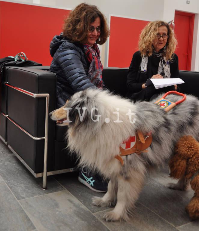 Ecco Pepita, il nuovo cane-guida di Patrizia Rosito donato dai Lions di Finale, Pietra e Loano