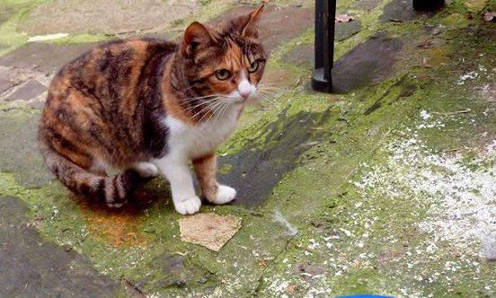 gatto colonia felina