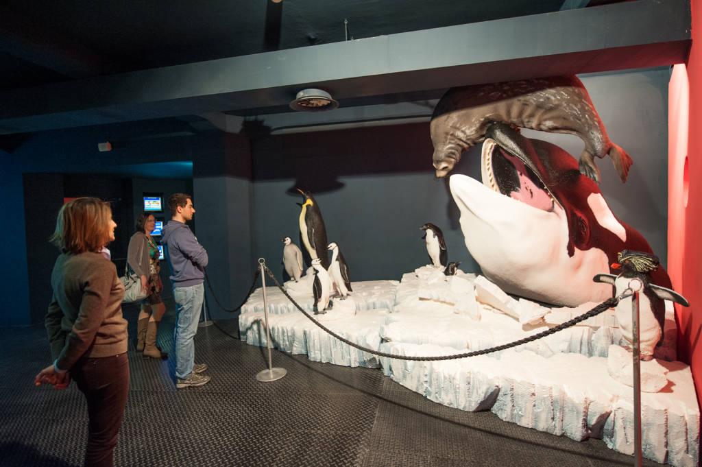 Risultati immagini per Il rinnovo del museo