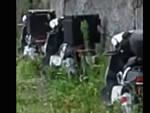 auto elettrica scooter provincia