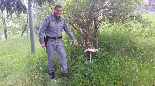 Come rapidamente guarire un fungo su unghie di unguento di gambe