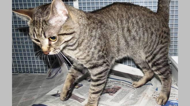 gatto via Famagosta