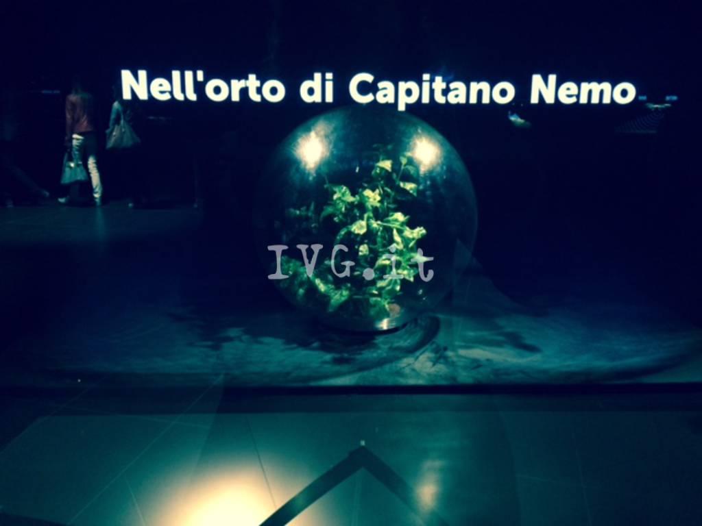 Basilico Nemo Noli