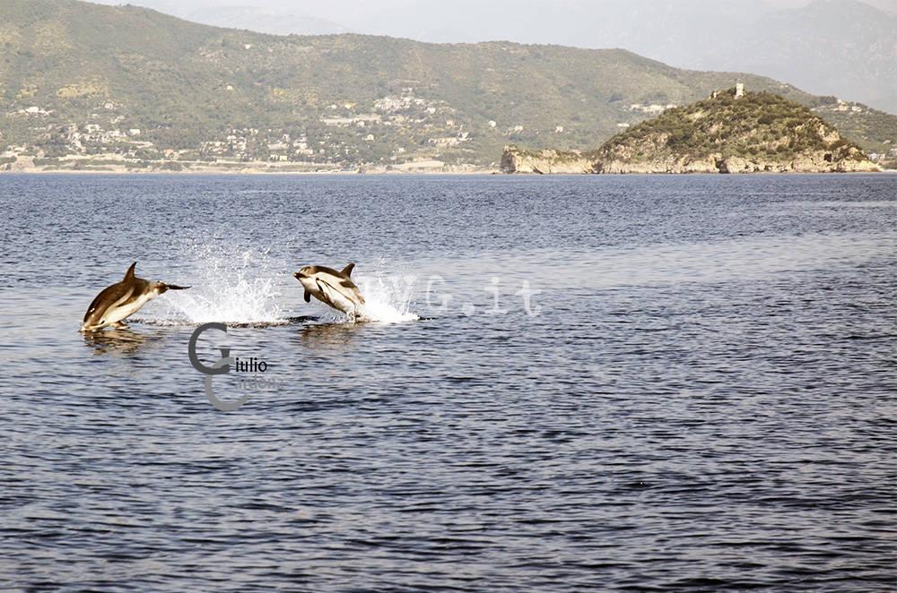 delfini alassio
