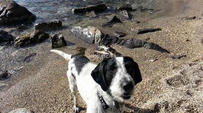 Franke, cane disperso