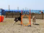 lido di fido cani spiaggia