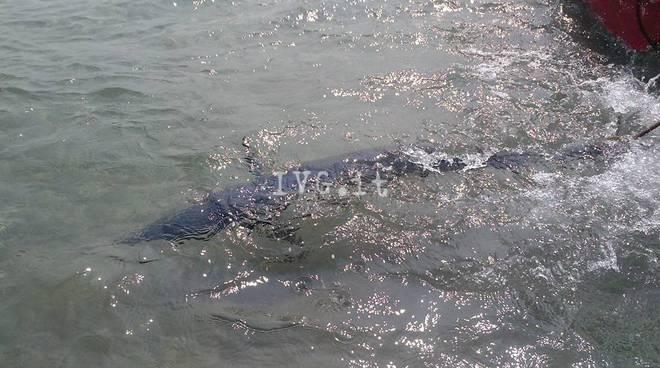 pesce spada laigueglia