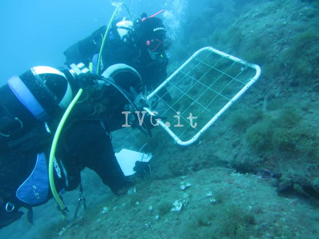 Fondali Isola Gallinara Biologia Marina