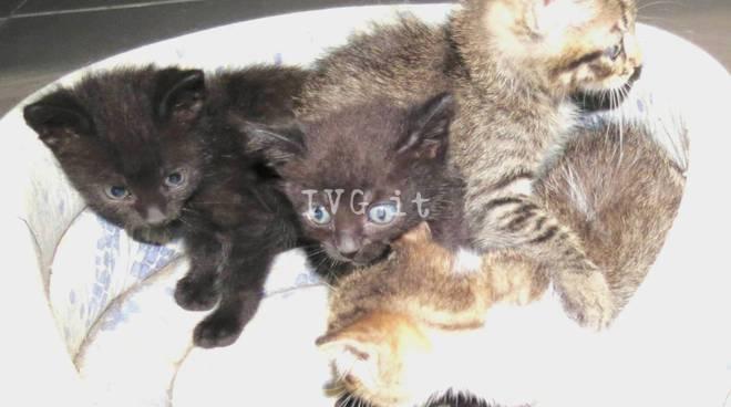 Gattini adozione savona