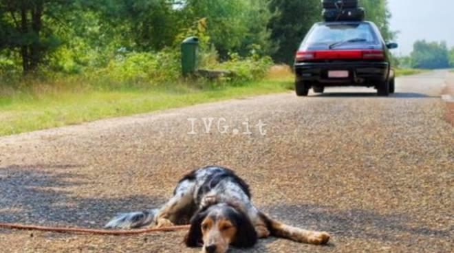 Cani abbandono estate