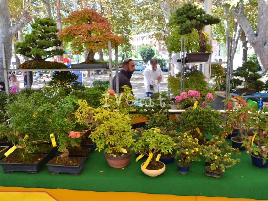 Andora Festival Bonsai