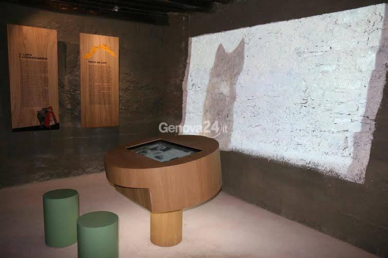 Il lupo in Liguria