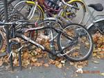albenga bici abbandonate