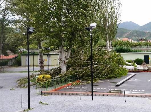 albero caduto spotorno