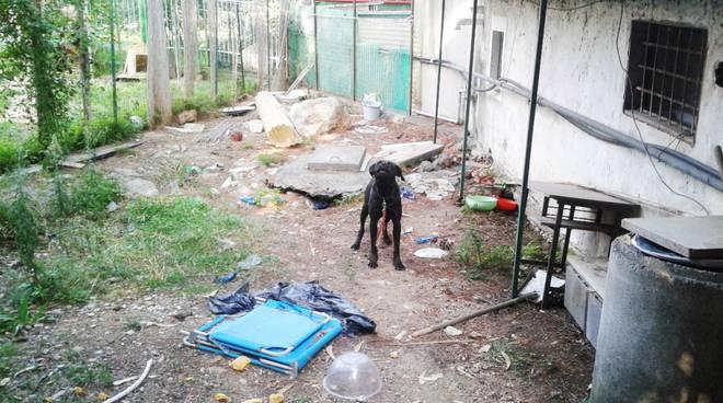 athena cane maltrattato