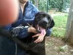 """Athena, il cane """"maltrattato"""" di Loano"""