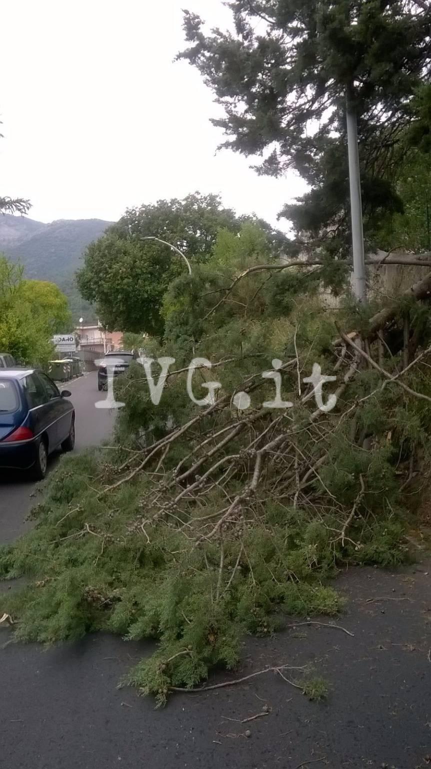 Boissano, vigilessa rischia di essere travolta da albero abbattuto dal vento