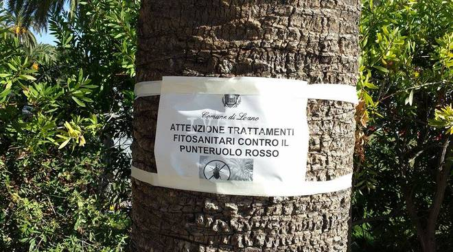 Loano Palme Punteruolo Rosso