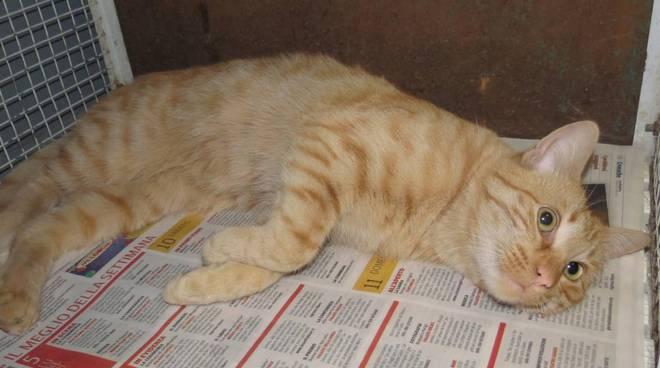 gatto smarrito Zucchero