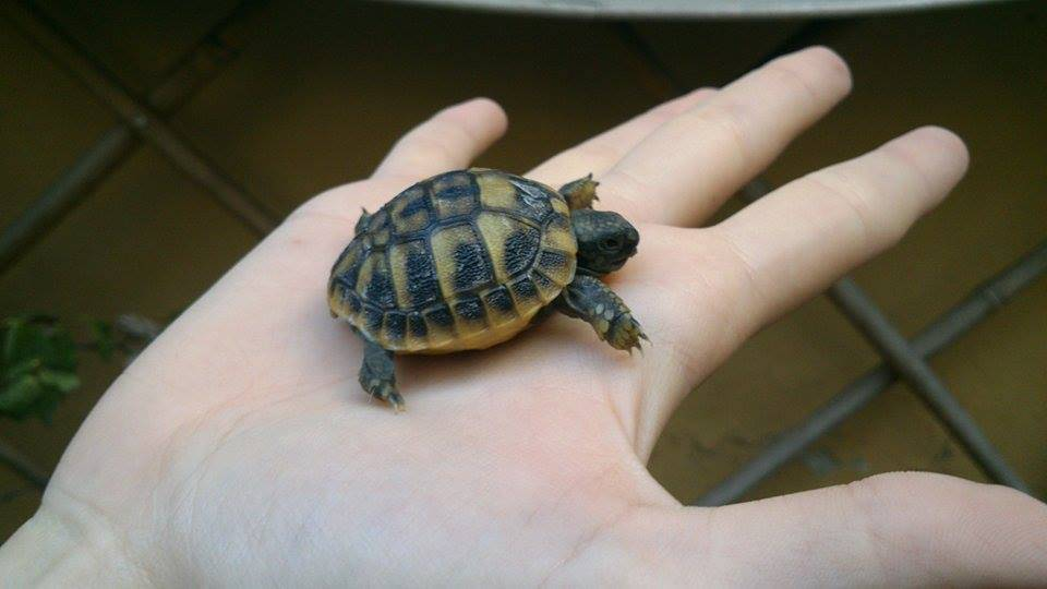 micro tartaruga enpa genova