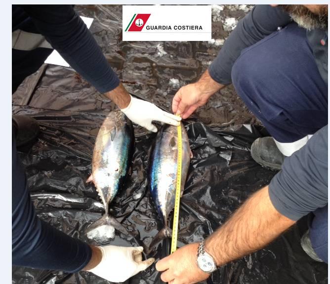 Pesca sportiva irregolare: Guardia Costiera sequestra oltre 75 kg di pescato