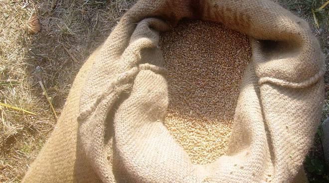 Sassello festa del grano