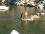 Cani salvati dai vigili del fuoco a Savignone