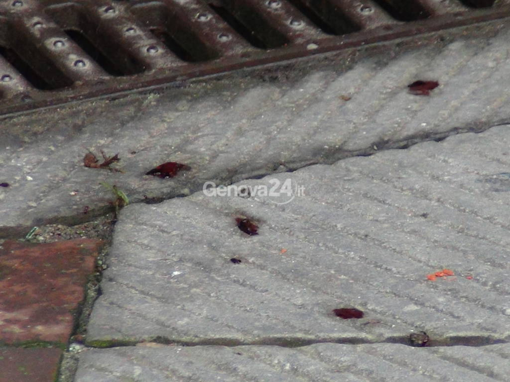 Centro storico, omicidio in vico dei Biscotti