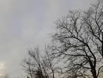 nuvole alberi