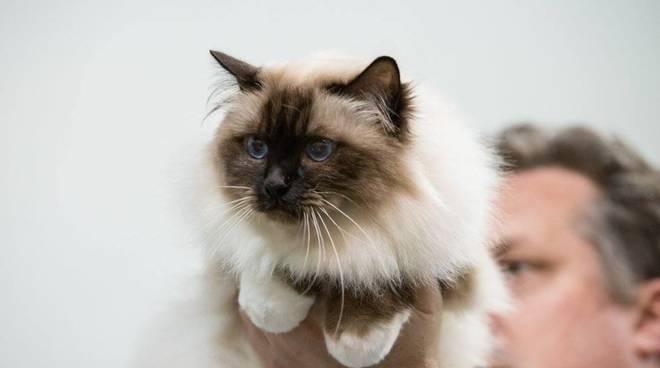 gatti mostra fiera genova