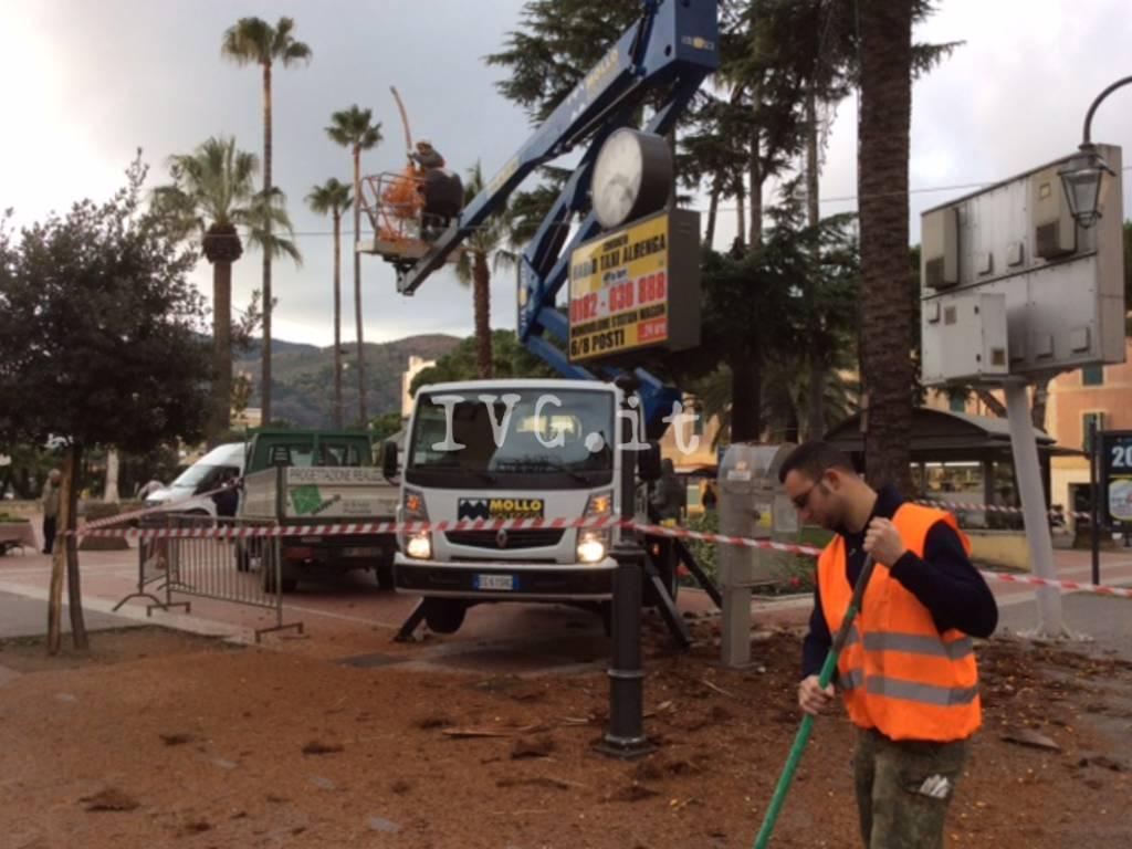 Prosegue la messa in sicurezza delle palme di piazza del Popolo ad Albenga