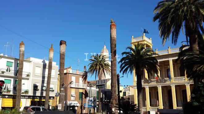 Borghetto Palme Piazza Libertà Punteruolo Rosso