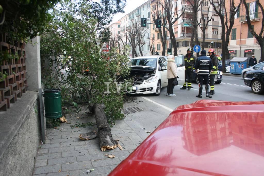albero caduto corso mazzini