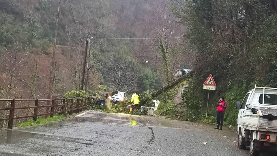 Albero caduto per il maltempo sulla sp della Scoglina