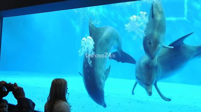 I delfini