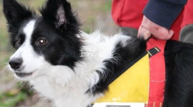 Cani Eroi Nella Ricerca Di Persone Disperse Spot Di Solidarietà A