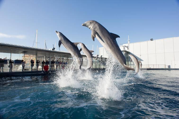 Delfini all'Acquario di Genova