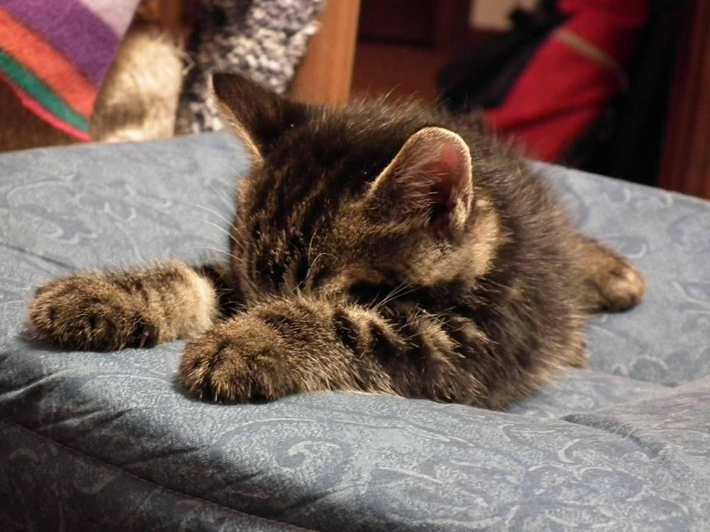 Festa nazionale del gatto GE24