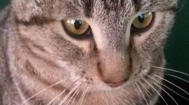 Festa nazionale del gatto IVG