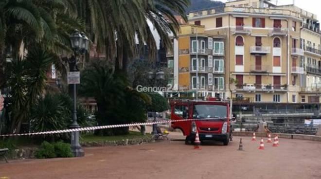 A Rapallo interventi contro il punteruolo rosso