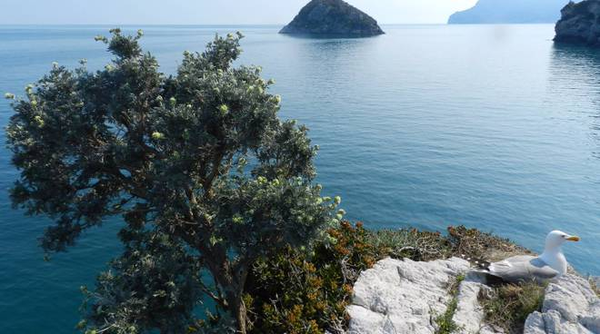 Punta Predani e la Grotta Marina