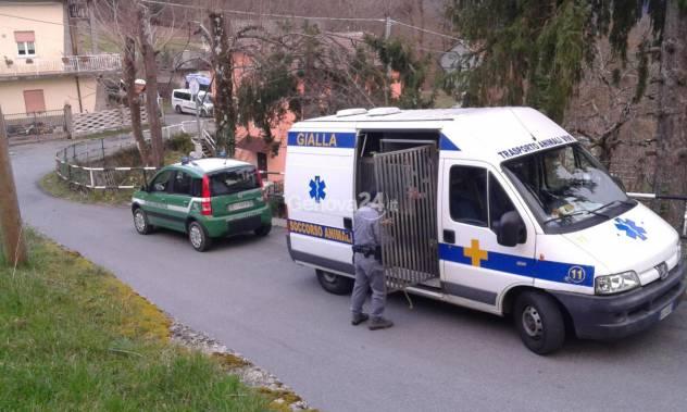 Cani abbandonati a Torriglia