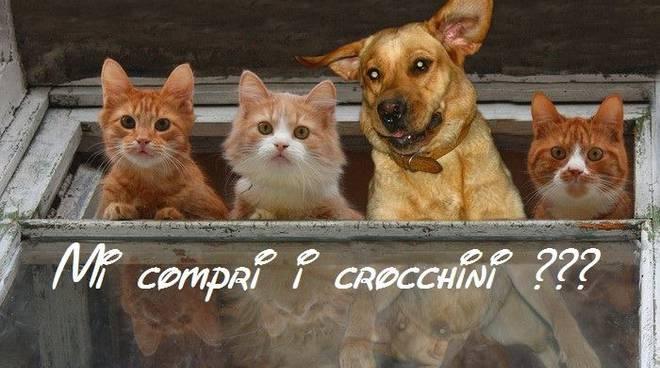 raccolta cibo gatti