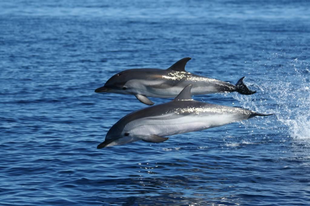 santuario pelago delfini balene